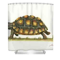 Red Footed Tortoise  Shower Curtain by Juan Bosco