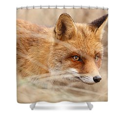 Red Fox On The Hunt Shower Curtain by Roeselien Raimond