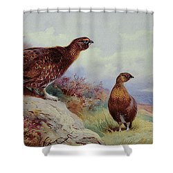 Red Grouse On The Moor, 1917 Shower Curtain by Archibald Thorburn