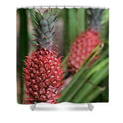 Red Pineapples Shower Curtain by Sabrina L Ryan