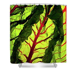 Red River Shower Curtain by Bobby Villapando