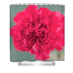 Red Rose Shower Curtain by Dick Willis