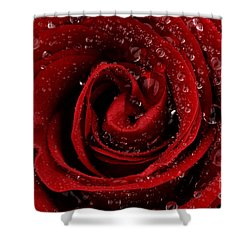 Red Rose Shower Curtain by Mark Johnson