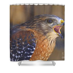 Red Shoulder Hawk Shower Curtain by Deborah Benoit