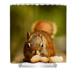Red Squirrel   Shower Curtain by Cale Best