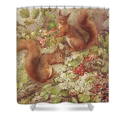 Red Squirrels Gathering Fruits And Nuts Shower Curtain by Rosa Jameson