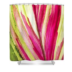 Red Ti Leaf Shower Curtain by Brandon Tabiolo - Printscapes