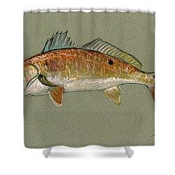 Redfish Watercolor Painting Shower Curtain by Juan  Bosco