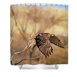Redtail On The Move Shower Curtain by Donna Kennedy
