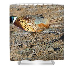Ring-necked Pheasant Rooster Shower Curtain by Mike Dawson