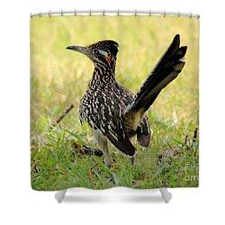Roadus Runamus Shower Curtain by Robert Frederick