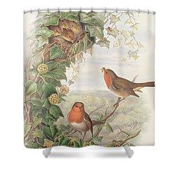Robin Shower Curtain by John Gould
