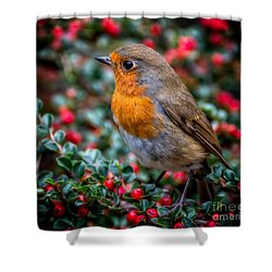 Robin Redbreast Shower Curtain by Adrian Evans