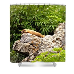 Rock Chuck Shower Curtain by Lana Trussell