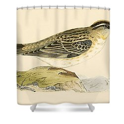 Rock Sparrow Shower Curtain by English School