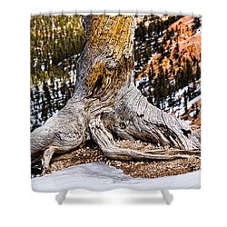 Roots Gripping The Edge Shower Curtain by Christopher Holmes