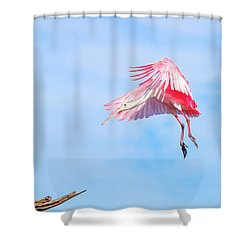 Roseate Spoonbill Final Approach Shower Curtain by Mark Andrew Thomas
