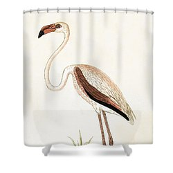 Rosy Flamingo Shower Curtain by English School