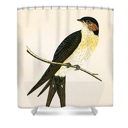 Rufous Swallow Shower Curtain by English School