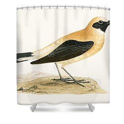 Russet Wheatear Shower Curtain by English School