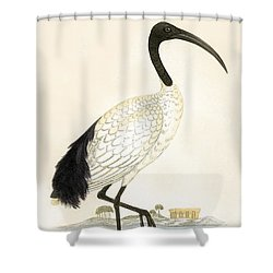 Sacred Ibis Shower Curtain by English School