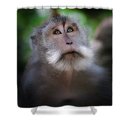 Sacred Monkey Forest Sanctuary Shower Curtain by Larry Marshall