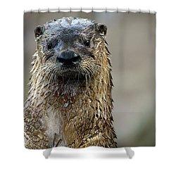 Sad Looking  Shower Curtain by Karol Livote
