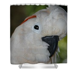 Salmon Crested Cockatoo Shower Curtain by Sharon Mau