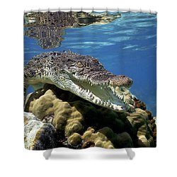 Saltwater Crocodile Smile Shower Curtain by Mike Parry