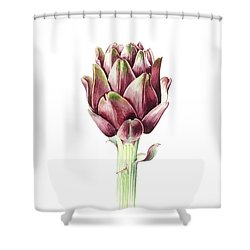Sardinian Artichoke Shower Curtain by Alison Cooper