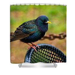 Saving A Seat Shower Curtain by Christopher Holmes