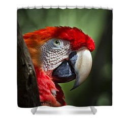 Scarlet Macaw Shower Curtain by Roger Wedegis