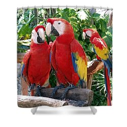 Scarlet Macaws Shower Curtain by Ellen Henneke