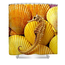 Sea Horse And Sea Shells Shower Curtain by Garry Gay