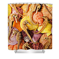 Sea Horses And Sea Shells Shower Curtain by Garry Gay