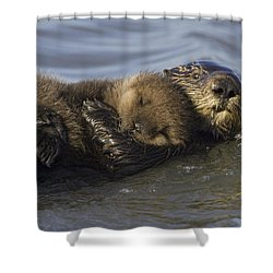Sea Otter Mother With Pup Monterey Bay Shower Curtain by Suzi Eszterhas