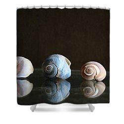 Sea Snails Shower Curtain by Linda Sannuti
