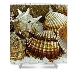 Shower Curtain featuring the photograph Sea Treasures by Frank Tschakert