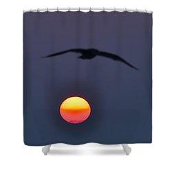 Seagull Sun Shower Curtain by Bill Cannon