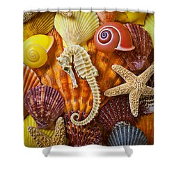 Seahorse And Assorted Sea Shells Shower Curtain by Garry Gay