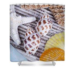 Seashells And Starfish Shower Curtain by Bill Brennan - Printscapes