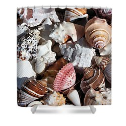 Seashells Shower Curtain by Kristin Elmquist