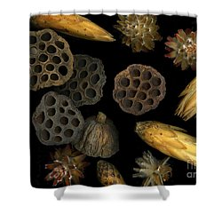 Seeds And Pods Shower Curtain by Christian Slanec