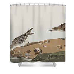 Semipalmated Sandpiper Shower Curtain by John James Audubon