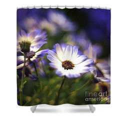 Senetti Dreams Shower Curtain by Dorothy Lee