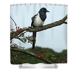 September Magpie Shower Curtain by Philip Openshaw