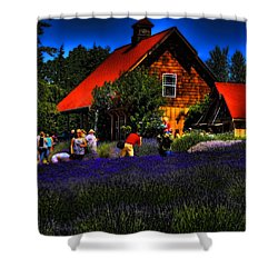 Sequim Lavender Shower Curtain by David Patterson