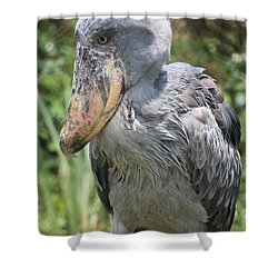 Shoebill Stork Shower Curtain by Carol Groenen