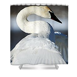 Showing Off Shower Curtain by Larry Ricker