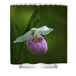 Showy Lady's Slipper.. Shower Curtain by Nina Stavlund